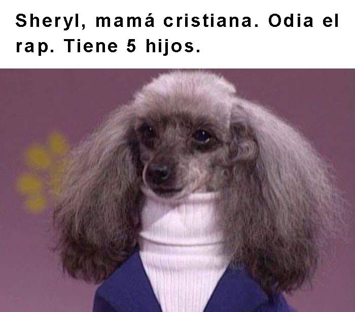 perro con sueter y cuello alto frase arriba