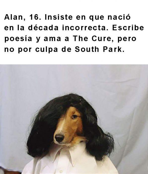 perro con una peluca negra y frase arriba