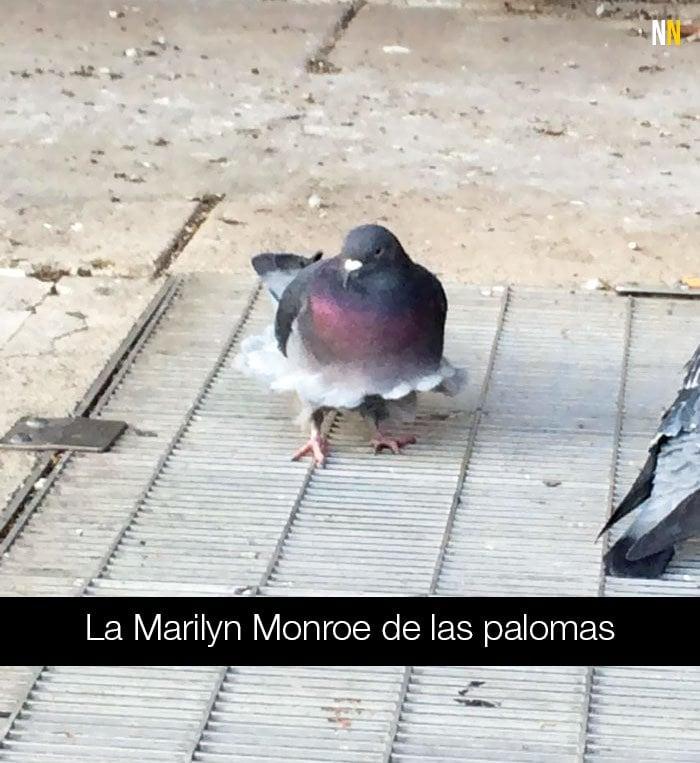 Paloma con pose de Marilyn Monroe