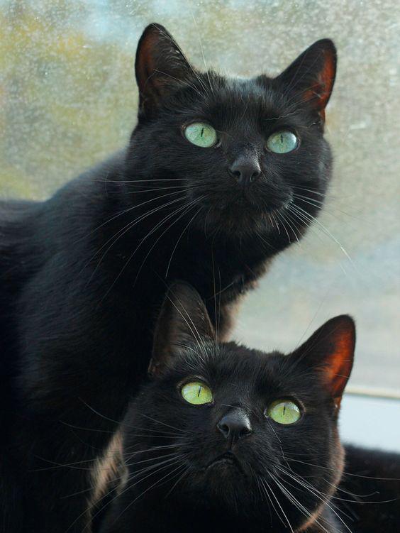 Ojos verdes de gatos negros