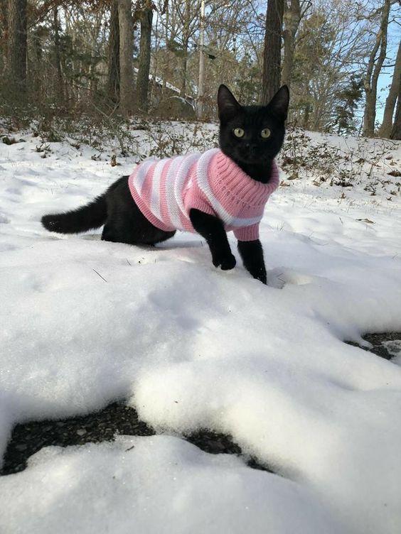 Gato con suéter en la nieve