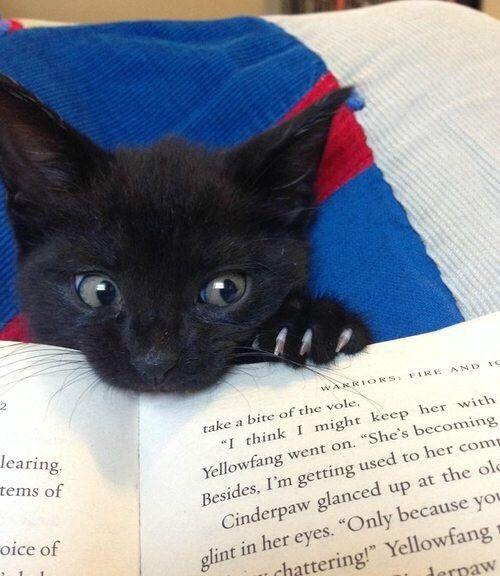 Gatito negro mordiendo un libro