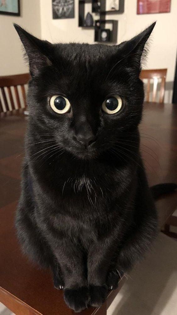 Razones por las que adoptar un gato negro