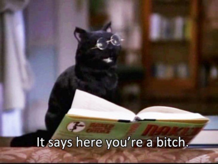 Gato con anteojos leyendo