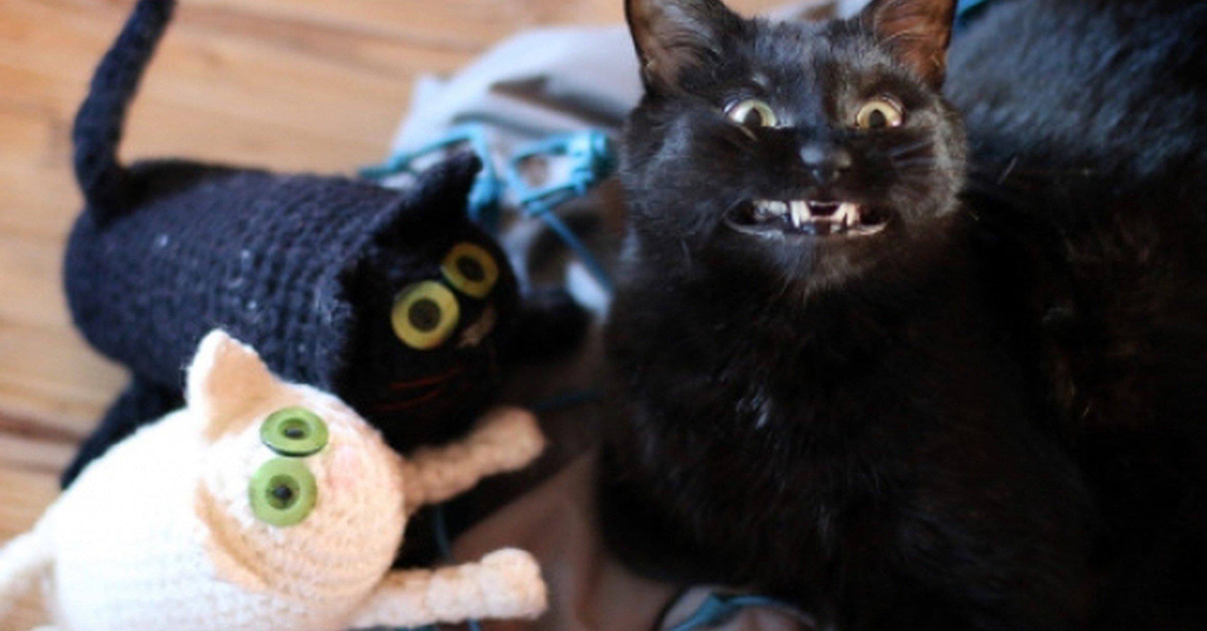 Gato negro sonriendo junto a un juguete de él mismo