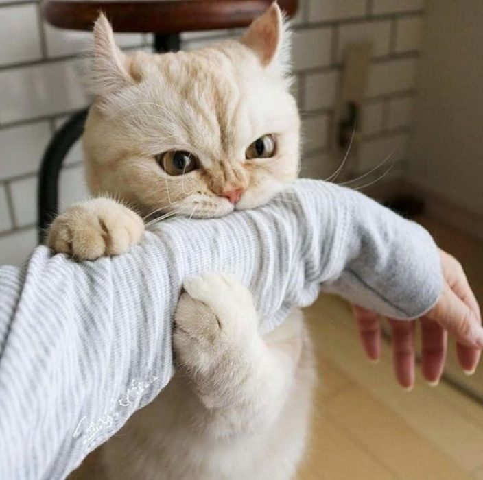 mordida de gato