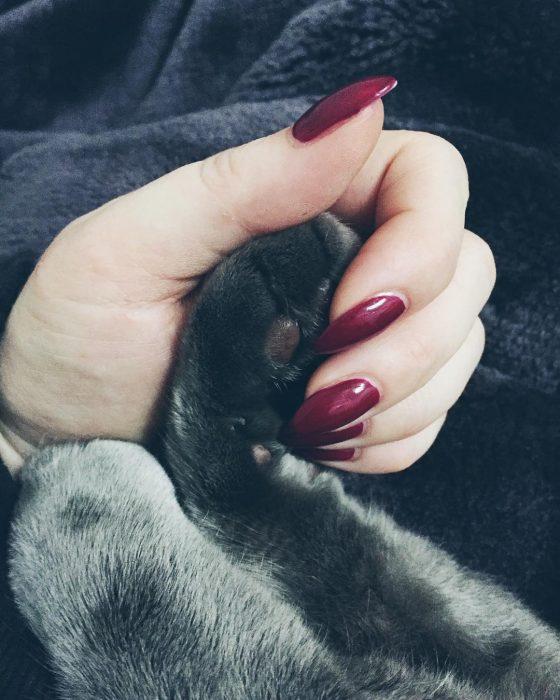 garrita de gato