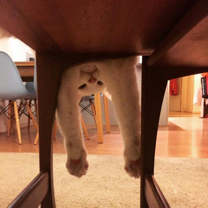 gato jugando