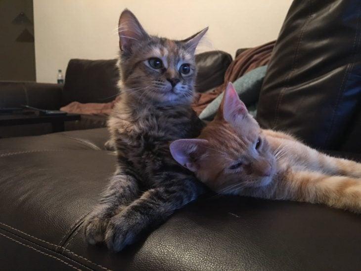 gatos viendo la tele