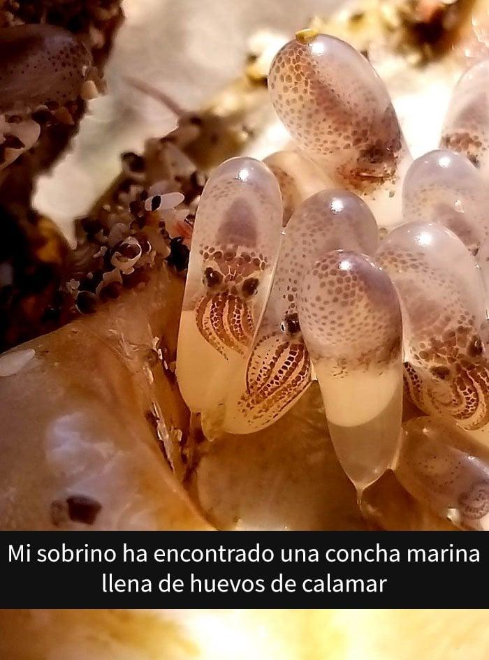 Huevos de calamar