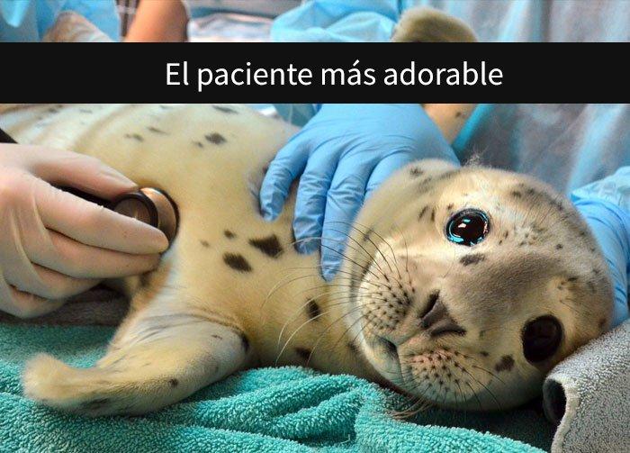 Una foca durante una revisión del veterinario