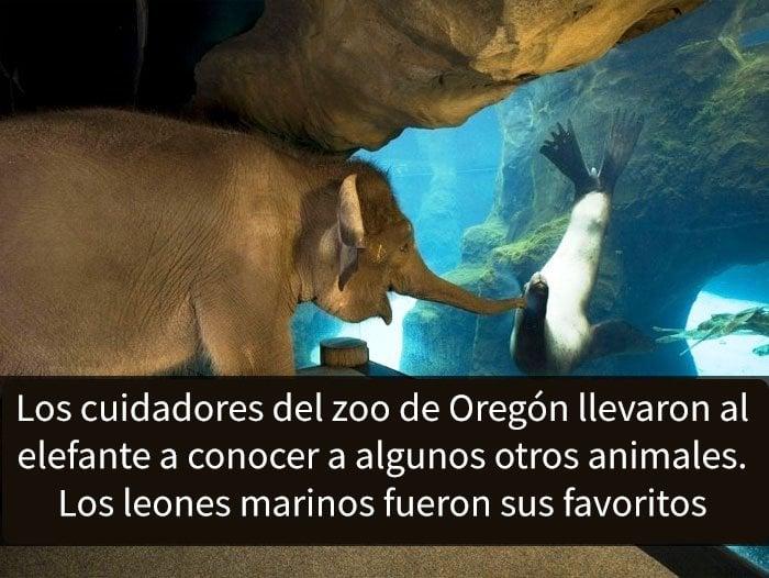 Elefante conociendo a un león marino