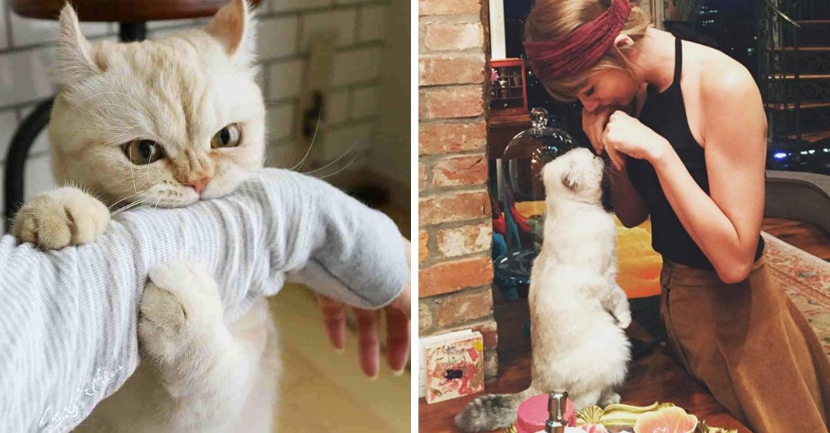 15 Datos curiosos que te harán amar más a tu gato que a tu perro