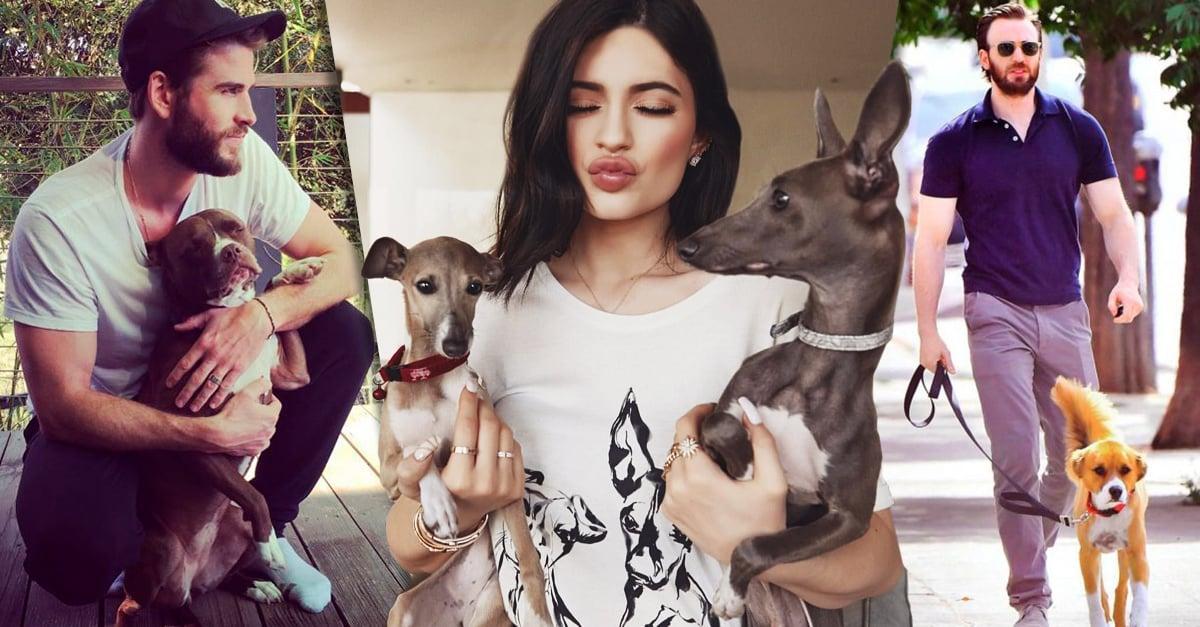 17 Cachorros que se han convertido en los mejore amigos de tus artistas favoritos
