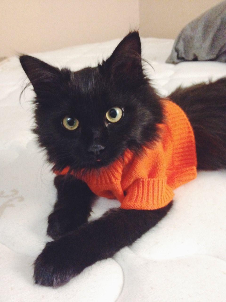Gatito negro con suéter
