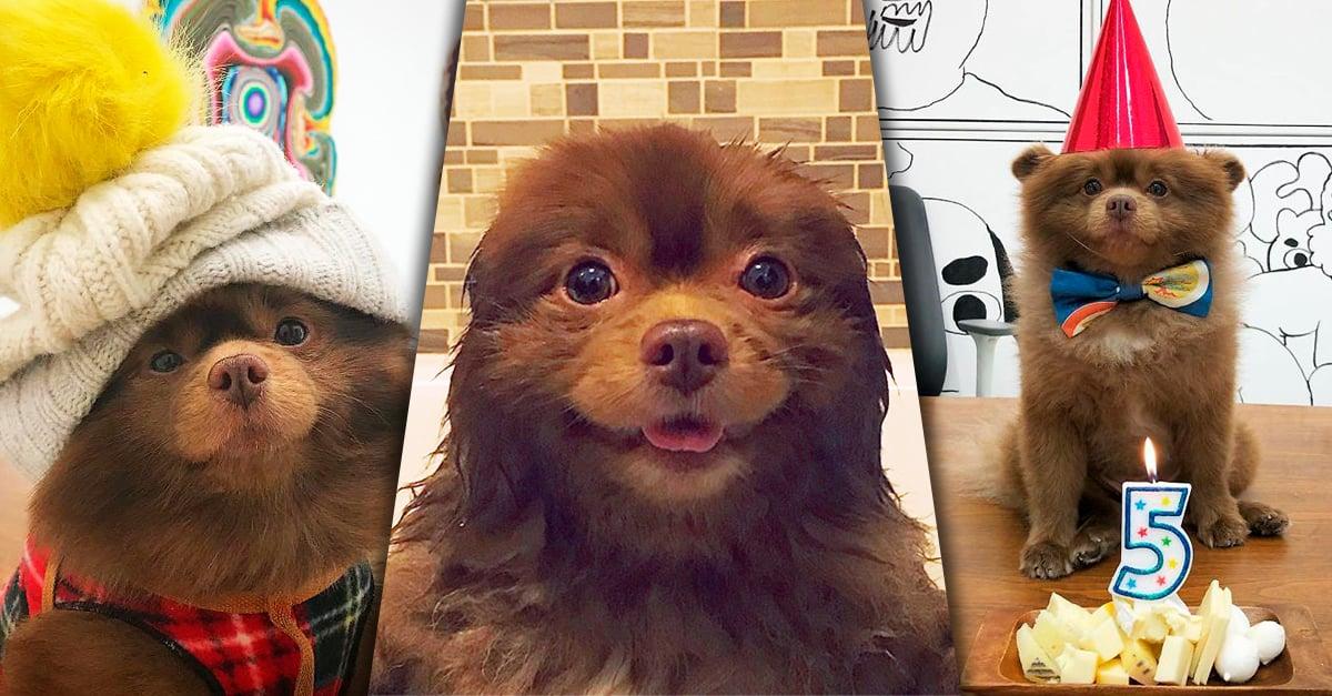 Esta perrita fue abandonada por su criador, ahora vive feliz