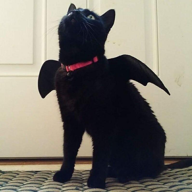 Gatito disfrazado de Entrenando a mi dragón