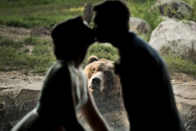 Pareja de novios casándose mientras un oso los ve