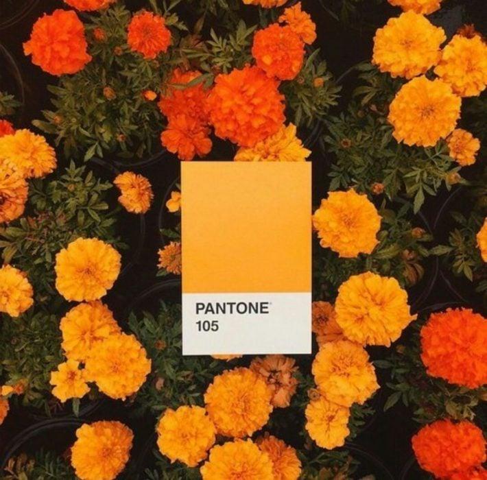 fondo de flores verdes con naranja y amarillo