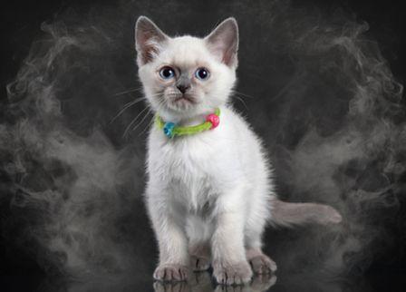 Gato rodeado de humo