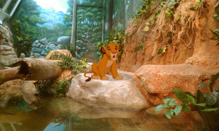 Simba en cautiverio en un zoológico