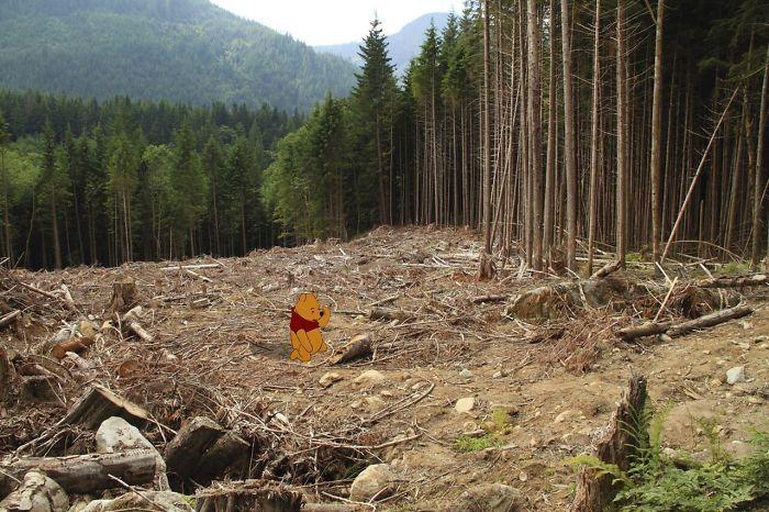 Winnie Pooh sentado en medio de un bosque deforestado
