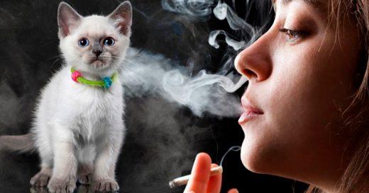 Los animales corren más riesgo de ser fumadores pasivos