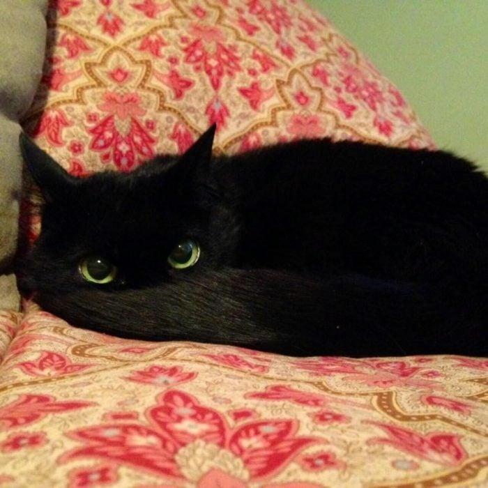 gato negro con ojos verdes atrás de su cola