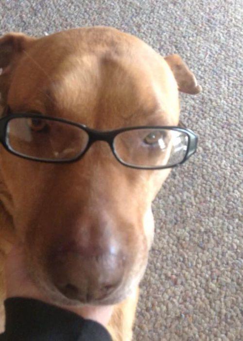 perro café con lentes y alfombra
