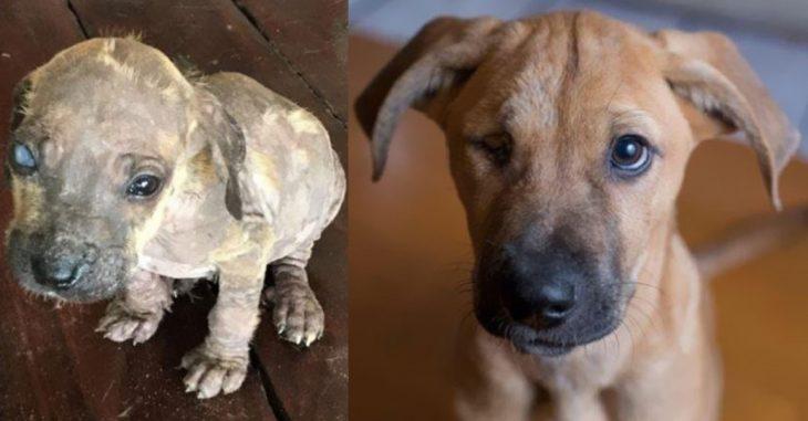 Animales antes y después de ser rescatados