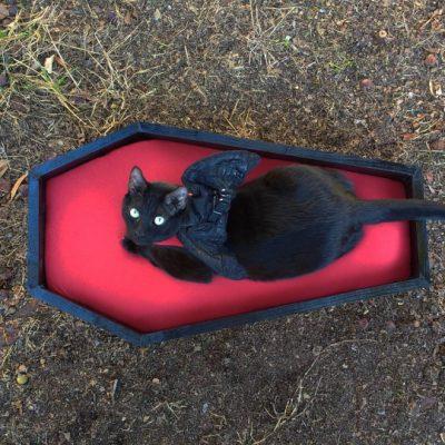 Cama de féretro para gato