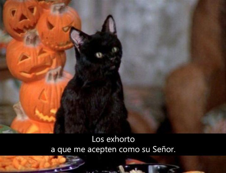 Signos que te dirán si compartes un alma gatuna con Salem Saberhagen