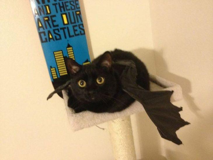 gato negro con alas de murciélago
