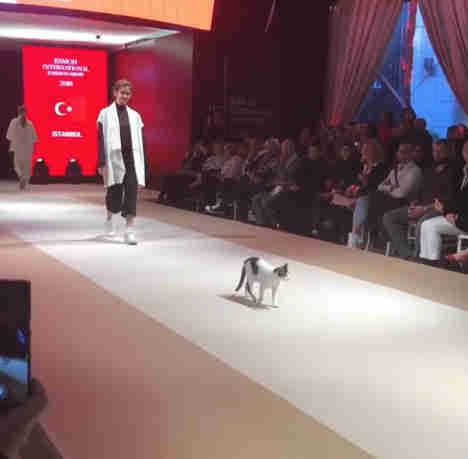 Gato desfilando junto a varias modelos en una pasarela de modas