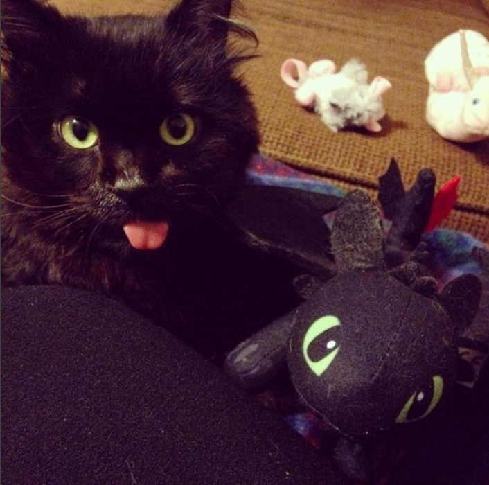 gato negro sacando la lengua junto a peluche de chimuelo