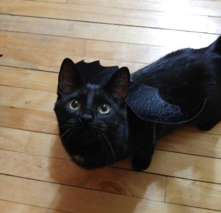 gato con alas de murcielago