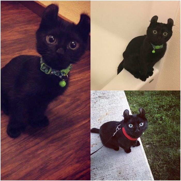 gato negro con pañuelo verde y correa roja