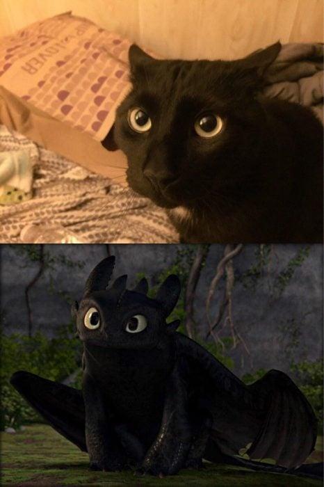 gato negro con ojos verdes junto a chimuelo