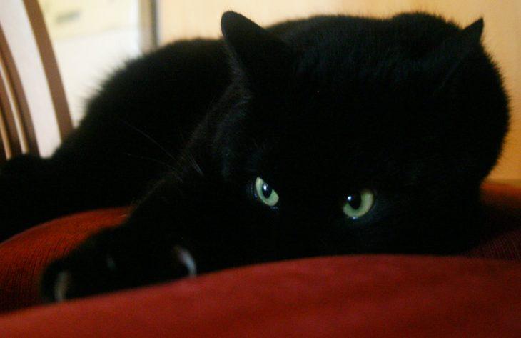 gato negro con ojos verdes grandes en cobija roja