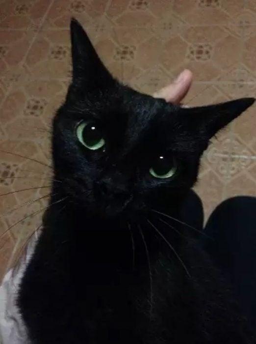 gato negro con ojos grandes verdes