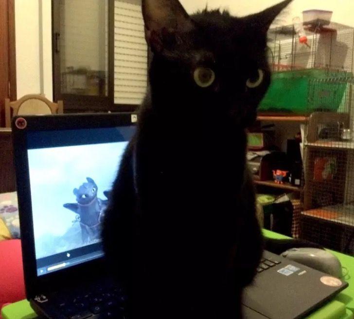 gato negro con ojos verdes frente de computadora