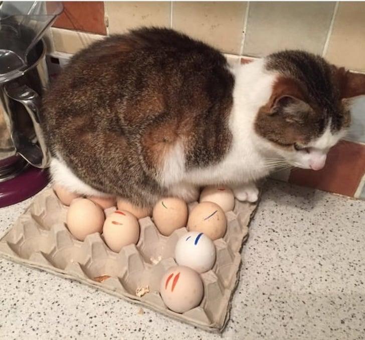 Gatos haciendo desastre sobre la comida, las cosas y cualquier articulo de la casa