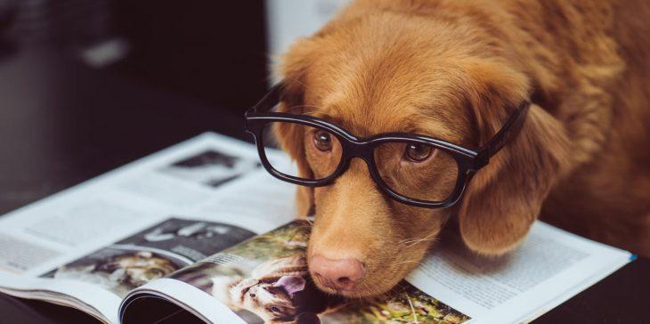 Perro café con lentes encima de una revista de perros