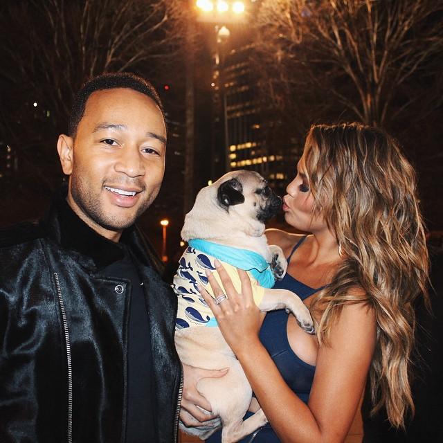 perrito cargado por famosos