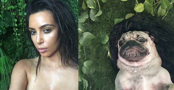 perro recostado en el pasto