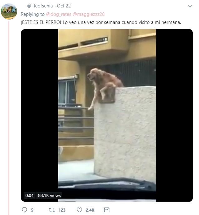 Usuario de twitter comparte su experiencia con el perro Riley