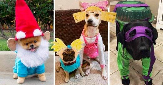 22 Ideas para que disfraces a tu perrhijo en Halloween