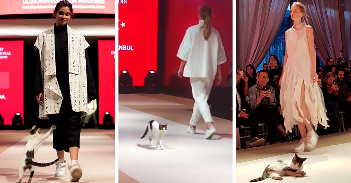 Este gatito se robó el show en un desfile de modas