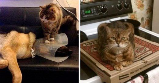 15 Gatos que demuestran que todos tienen una actitud arrogante