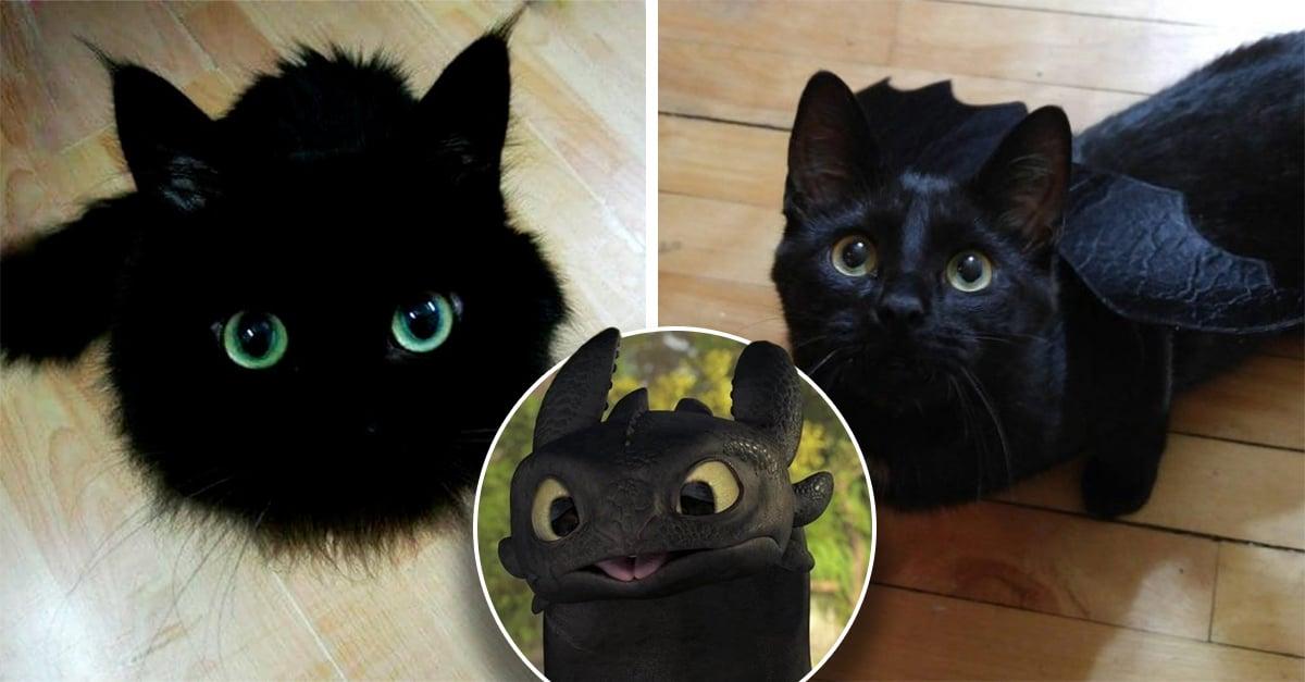 13 Gatos que podrían ser la versión Live Action en miniatura de Chimuelo en 'Como entrenar a tu dragón'